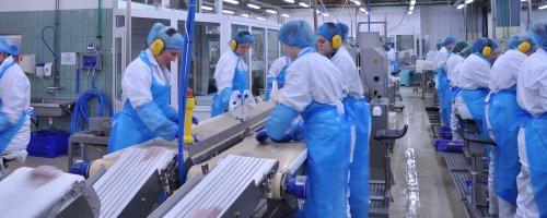 grandi_fish_processing_conveyor_belt3_2011
